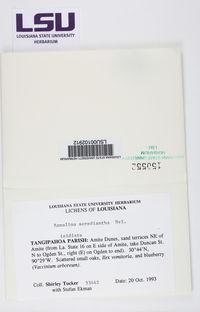 Ramalina sorediantha image