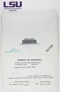 Parmotrema reticulatum image