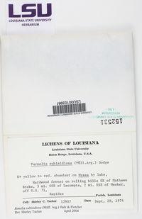 Parmotrema subisidiosum image