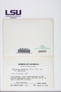 Phyllopsora parvifolia image