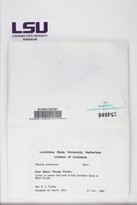 Physcia americana image