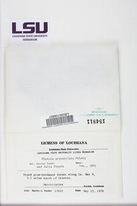Physcia atrostriata image