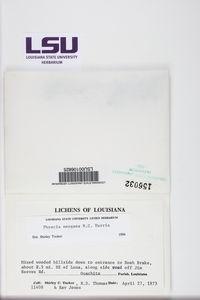 Physcia neogaea image