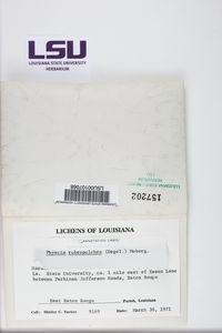 Phaeophyscia rubropulchra image