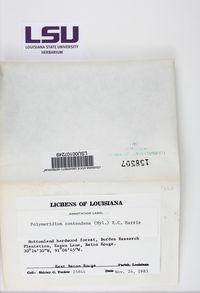 Polymeridium contendens image
