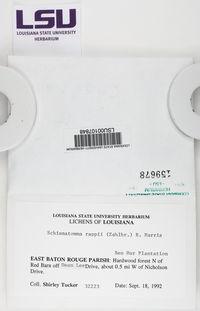 Schismatomma rappii image