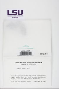 Porina nucula image