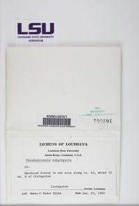Astrothelium variolosum image