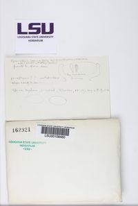 Pyrenopsis subfuliginea image