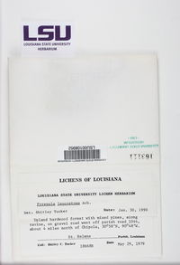 Pyrenula leucostoma image