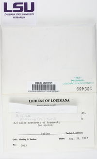 Trapeliopsis viridescens image