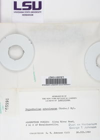 Astrothelium phlyctaena image