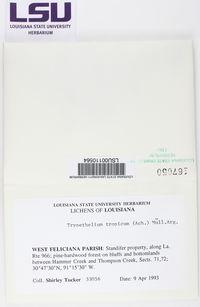 Nigrovothelium tropicum image