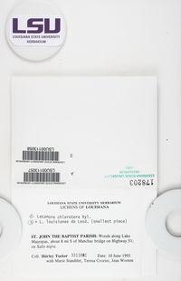 Lecanora louisianae image