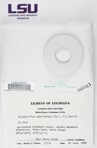 Polymeridium subcinereum image