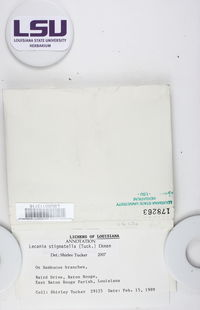 Bacidina egenula image