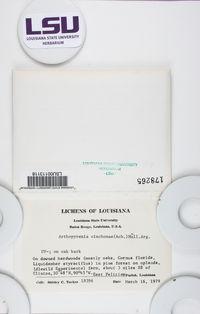 Constrictolumina cinchonae image