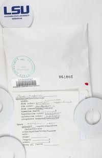 Caeruleum heppii image