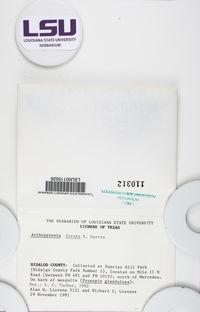 Constrictolumina lyrata image