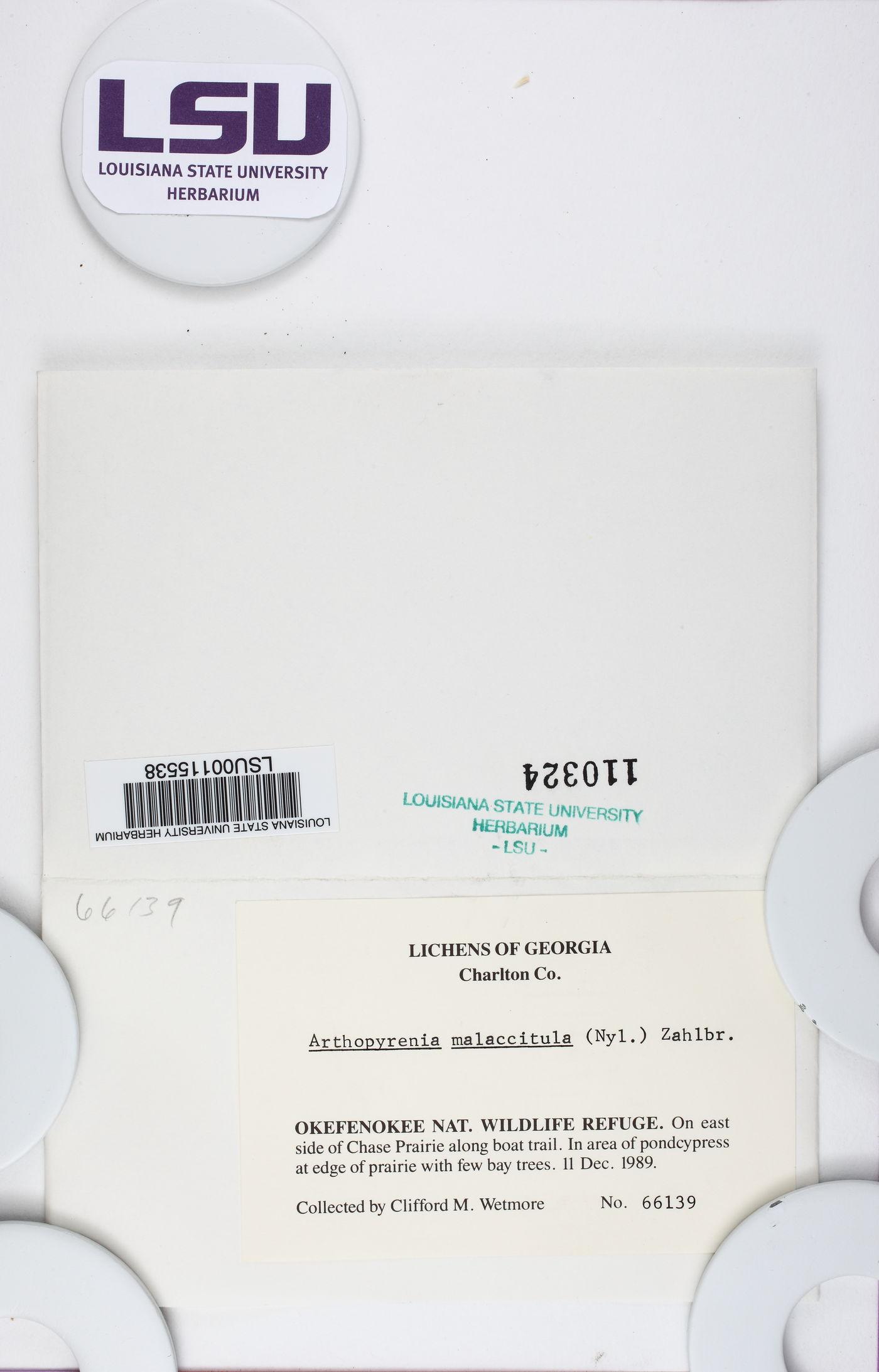 Constrictolumina malaccitula image