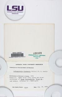 Arthopyrenia plumbaria image