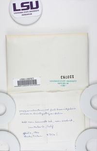 Aspicilia californica image