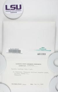 Aquacidia trachona image