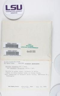 Ionaspis lacustris image