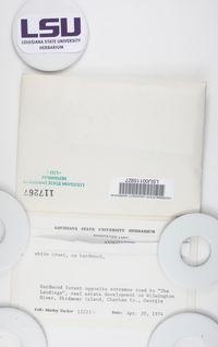 Bactrospora carolinensis image