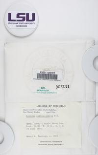 Carbonicola anthracophila image