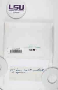 Calicium abietinum image