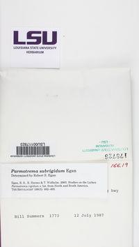 Parmotrema subrigidum image