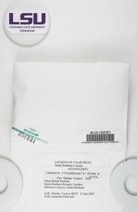 Lecanora circumborealis image