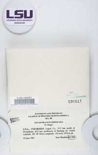 Rhizoplaca novomexicana image