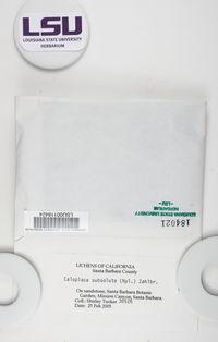Squamulea subsoluta image