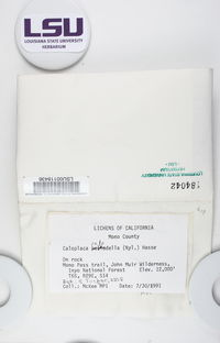 Caloplaca pellodella image