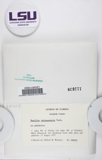 Gassicurtia catasema image