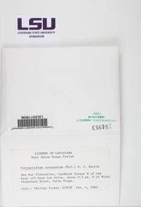 Polymeridium catapastum image