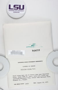 Calicium viride image