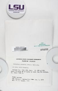 Rufoplaca arenaria image