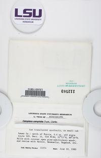 Phaeoplaca camptidia image
