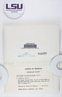 Solitaria chrysophthalma image