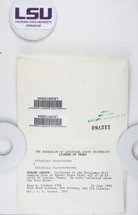 Xanthocarpia feracissima image