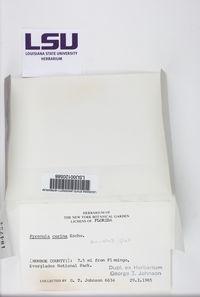 Pyrenula cerina image