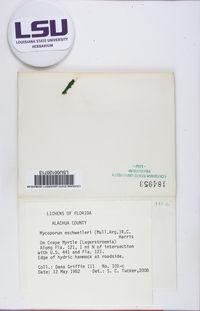 Mycoporum eschweileri image