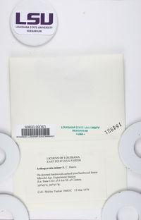 Arthopyrenia minor image