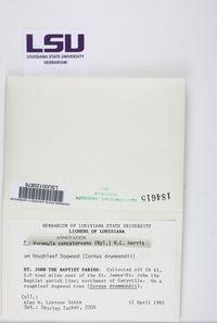 Pyrenula sexlocularis image
