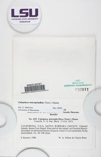 Caloplaca microphyllina image