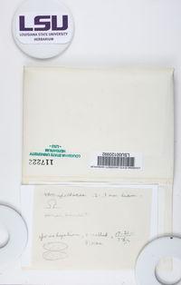 Bryoplaca sinapisperma image