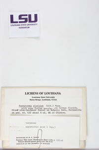 Loxospora elatina image
